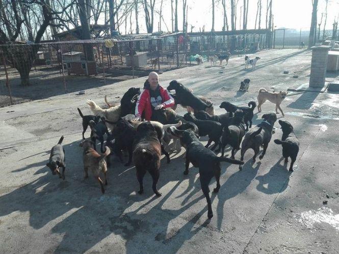 OVE GLADNE DUŠE MOLE ZA POMOĆ: Velika akcija prikupljana hrane za 250 pasa! (VIDEO)